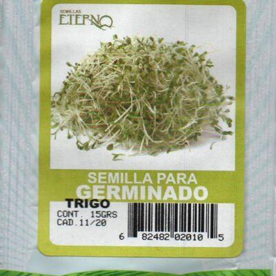 Semilla Orgánica de Trigo